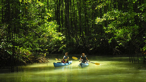 Kayaking In The Jungle