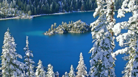 Snow Covered Trees at Lake Tahoe
