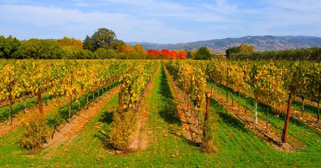 Wine World Tours, USA