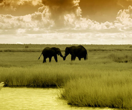 Africa's Chobe Game Reserve