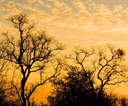 Sunset Over The African Bush in South Africa