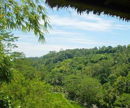 Bali Kupu Kupu Barong