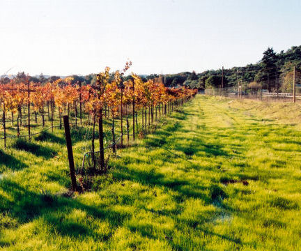 California's Sonoma Wine Country