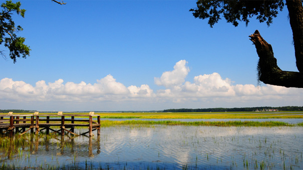 wetlands and wildlife preserve near the parris island marine recruit depot