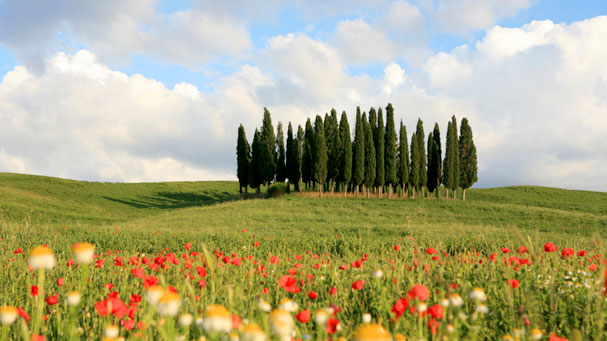 Meadow and Cypresses